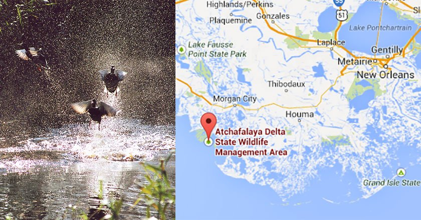 5 Best Places to Duck Hunt in Louisiana