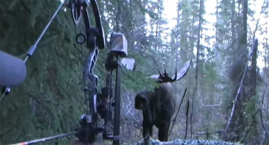 Must-See Hunting Video