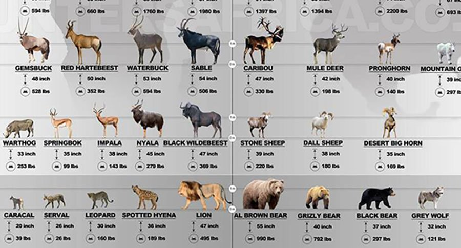 Game Animals: Africa vs North America [INFOGRAPHIC]