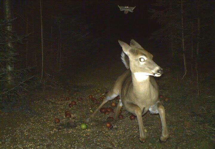 9 Creepy Trail Cam Photos to Put You on Edge