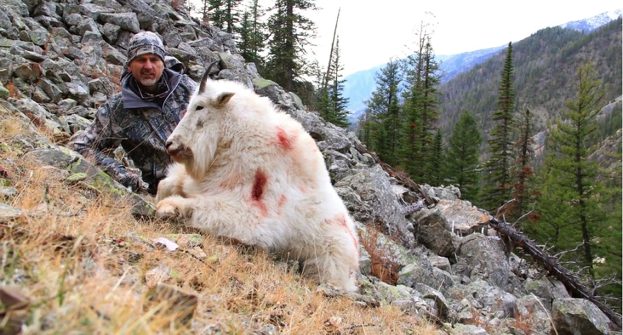 Steve Tittsworth with his Montana Mountain Goat