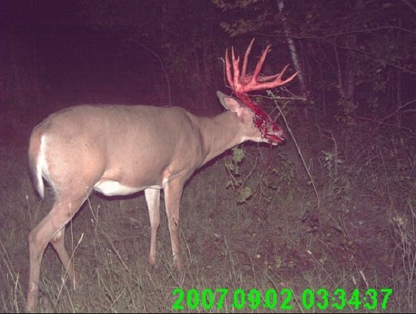 best trail cam photos