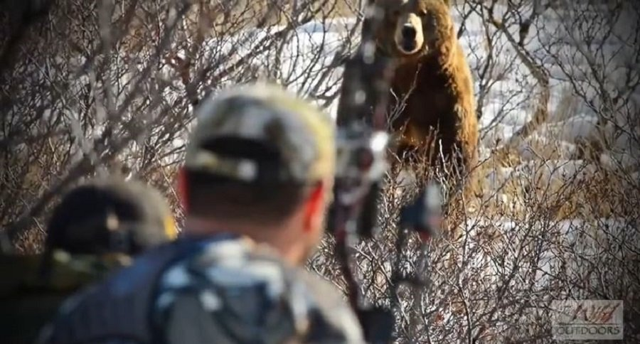 Archery Hunt for Brown Bear