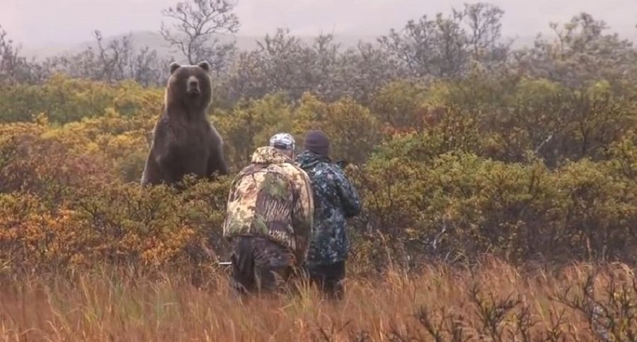 This Close Range Brown Bear Hunt Will Get Your Blood Pumping