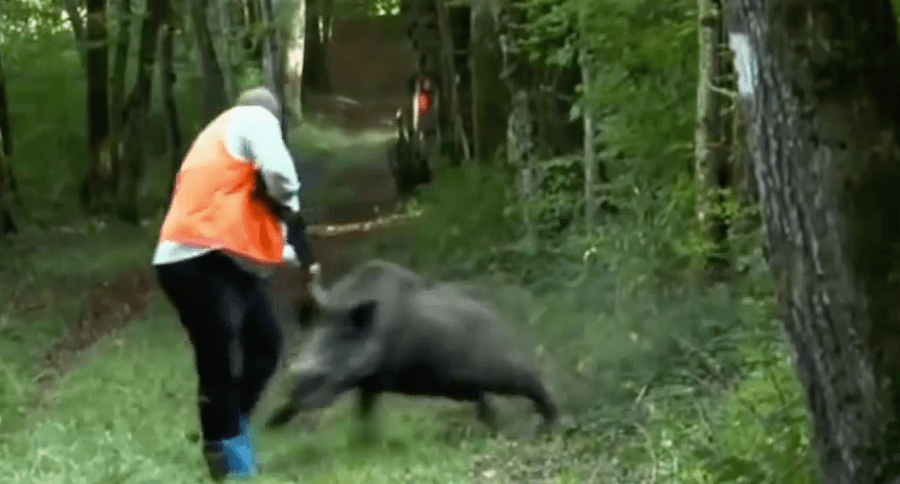 10 Jaw-Dropping Wild Boar Attacks