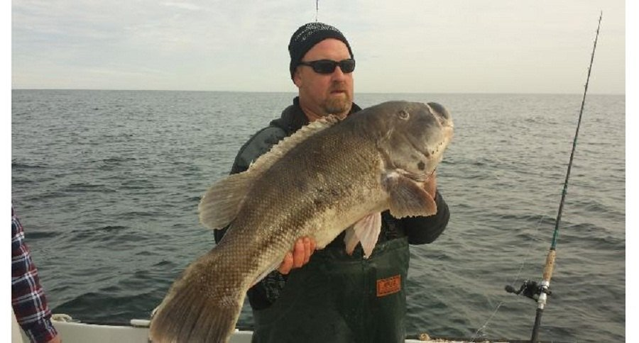 world record tautog