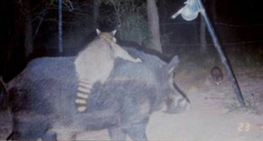 Trail cam weird pictures