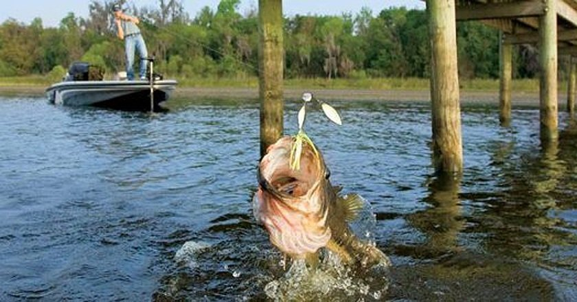 10 best places to catch spring bass in missouri pics for Fishing lakes in missouri
