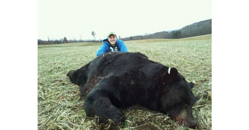 Biggest Black Bears
