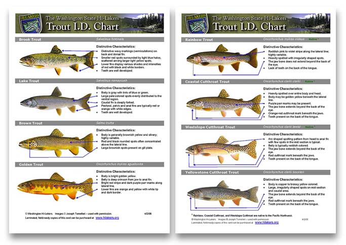 Big-fish-ID-chart-2