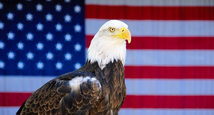 How The Bald Eagle Became Americas National Symbol