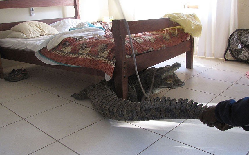 Zimbabwe man makes a chilling discovery and finds an for Beds zimbabwe
