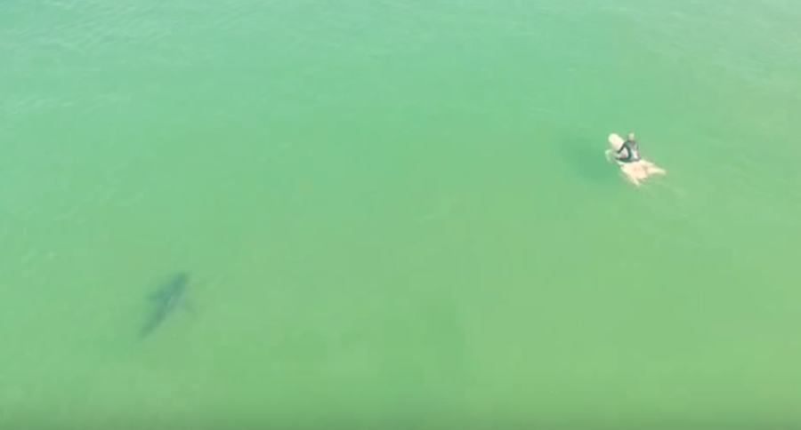 Drone shows shark prowling near california surfing hotspot for Drone surf fishing