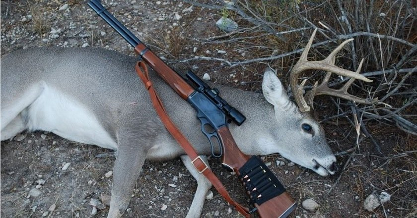 things your deer hunting guide isn't telling you deer rifle