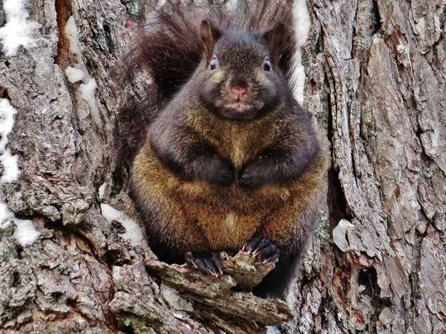 Warmer Winter Weather Is Making Squirrels Extra Tubby This