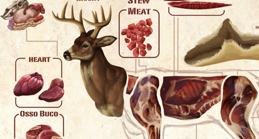 this diagram makes butchering a deer look easy rh wideopenspaces com Deboning Deer Whitetail Deer Butchering