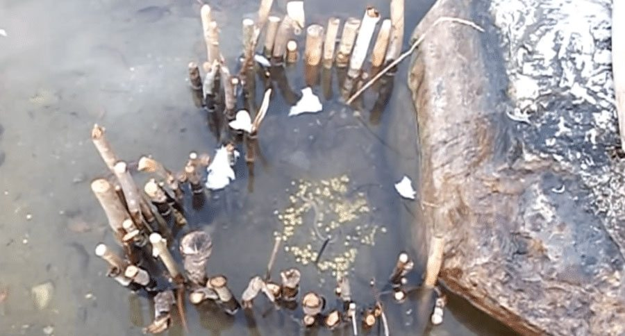 How to make 2 types of primitive fish traps for How to make a fish trap for big fish