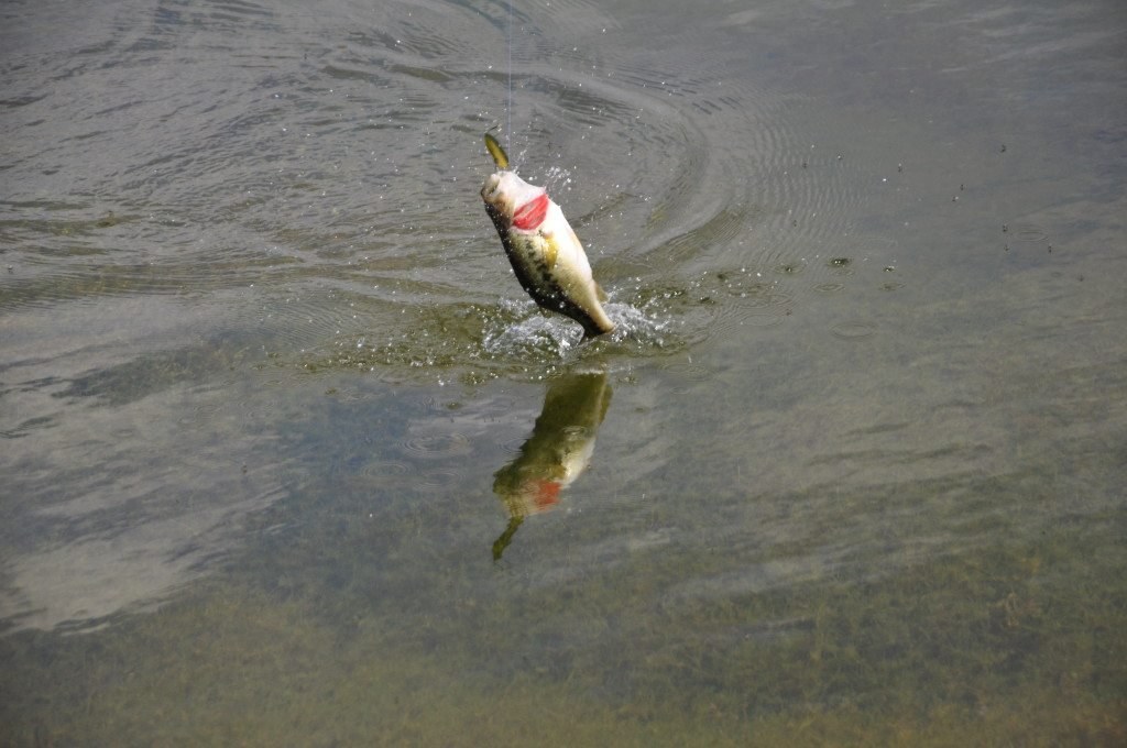 How to fish for pond bass with these 6 tips Best lures for pond fishing