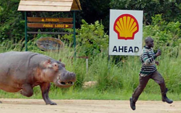 Pablo Escobar's Hippos Are Causing All Sorts of Trouble in Colombia