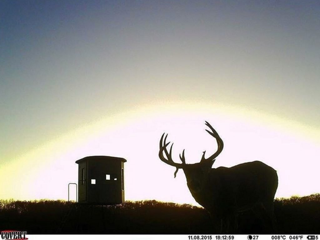 giant buck trailcam