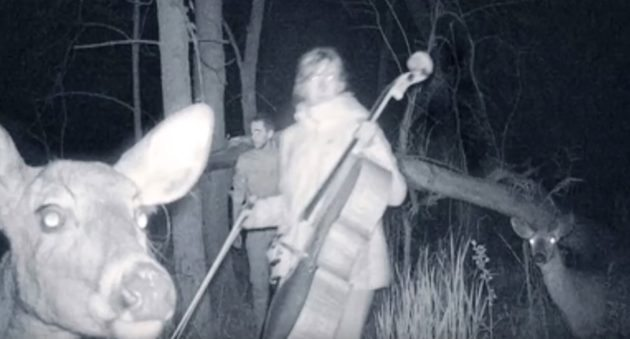 20 Unexplainable Trail Camera Pictures - Wide Open Spaces-9631