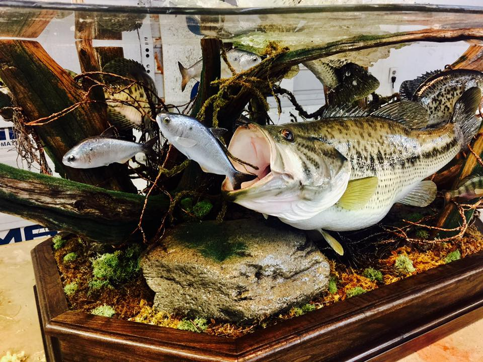 this vanmar taxidermy mount will blow your mind