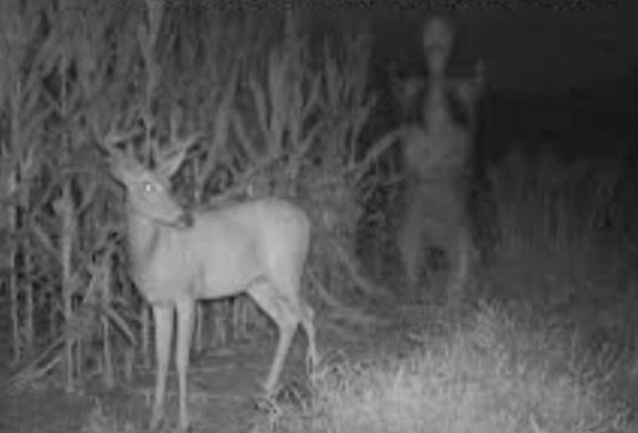 deer-scary-trail-camera-pics