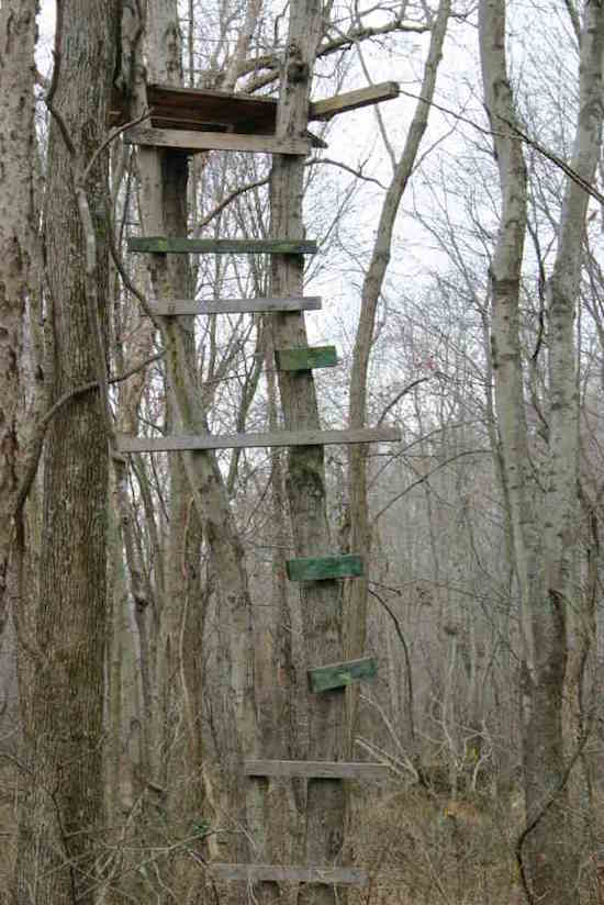 15 Photos That Display The Mystery Behind Old Treestands