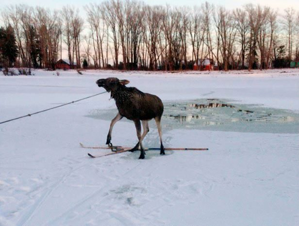 Siberian Ice Fisherman