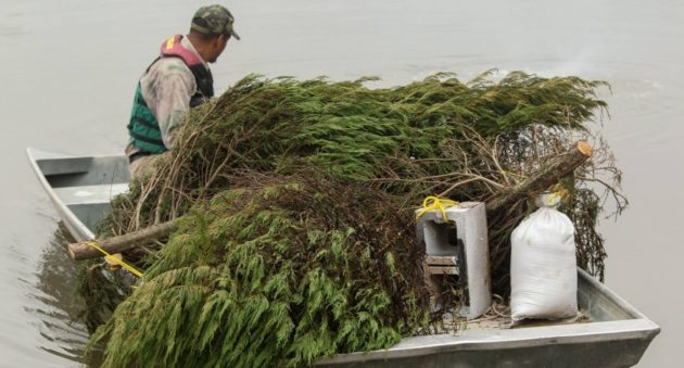 Don't Throw Out Your Old Christmas Tree, Donate It For