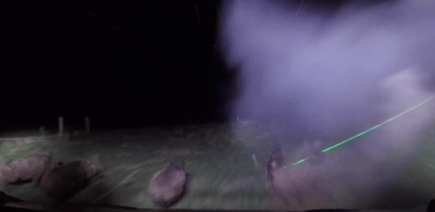 hog hunting, ultimate night vision