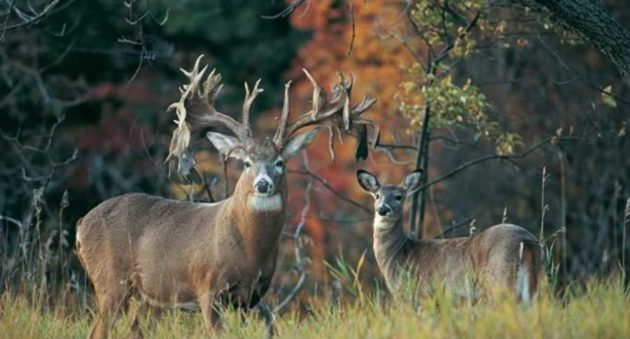 5 of the Biggest Whitetail Bucks Found Already Dead