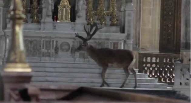 Stag in Paris Church