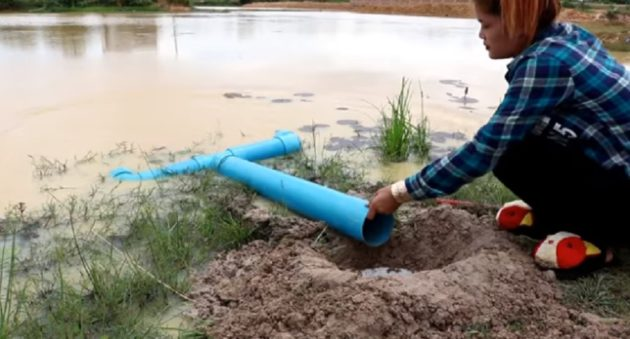 diy pvc pipe fish trap