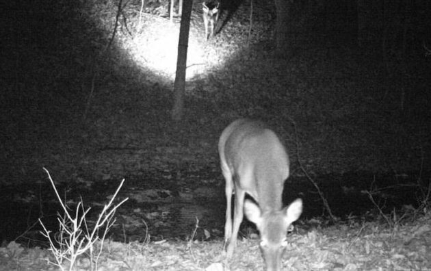 trail camera crazy image photo picture