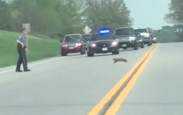 police shoot groundhog